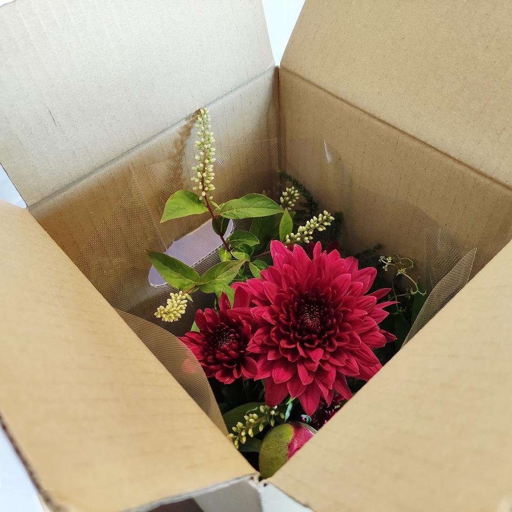 花のサブスク「LIFFT」申し込み~初回お届けのレビュー
